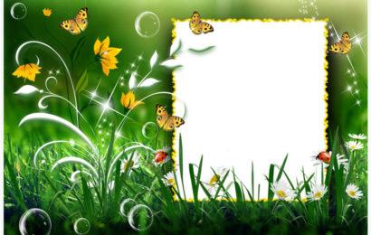 Chia sẻ file psd khung ảnh phong cảnh và những con bướm đẹp