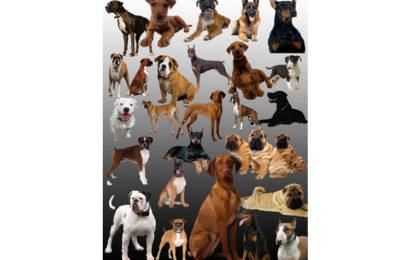 Chia sẻ psd tài nguyên động vật chó đẹp