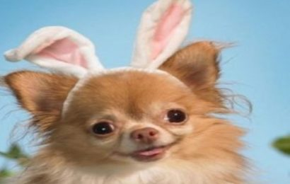Tuyển chọn hình nền chú thỏ con dễ thương cho điện thoại OPPO RENO4 Pro