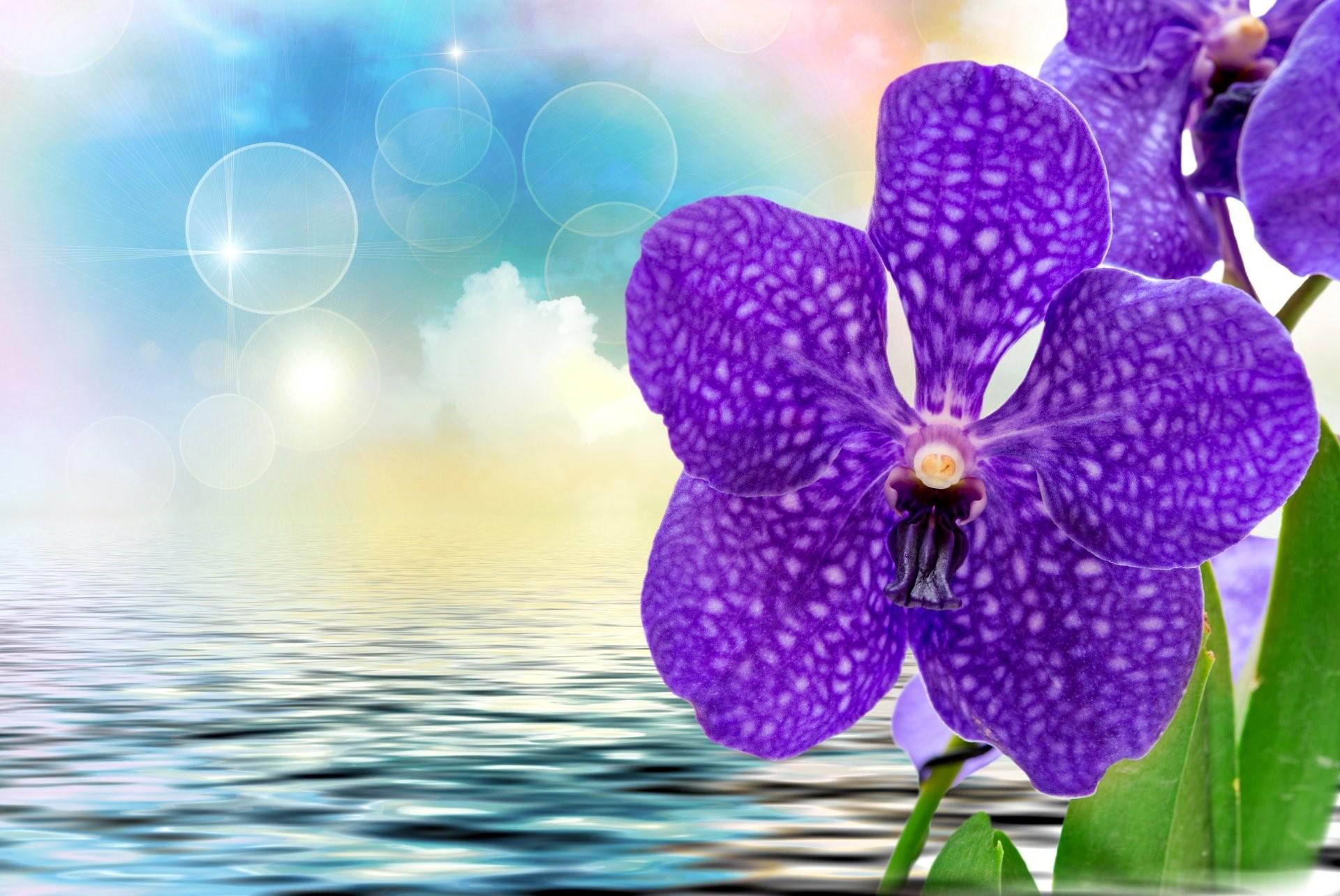 Hình nền hoa phong lan cho máy tính đẹp số 23
