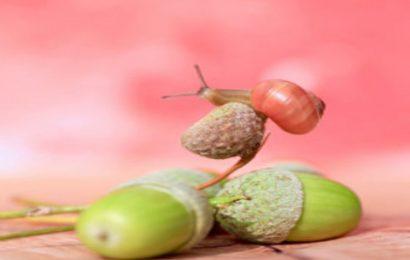 Tuyển tập 50 hình nền quả sồi acorn đẹp nhất cho máy tính, laptop